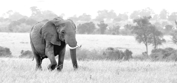 Marching out on the Mara