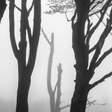 Misty Trees - Dartmoorr