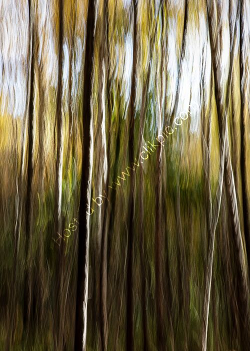 Abstract Woodland 2