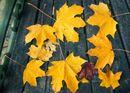 Autumn Seat
