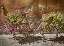 Bicycle Petals