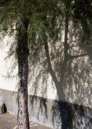 Afternoon Shadow