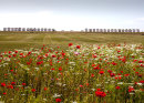 Poppy Beach (3) poppy conservation remembrance