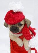 Puppies 15