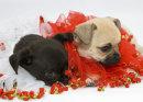 Puppies 49