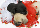 Puppies 50