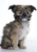 Puppies 59