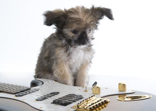 Puppies 78
