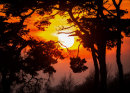 Rustington Sunset