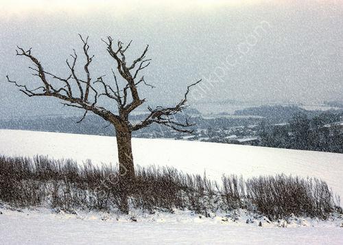 Snow on Bury Hill