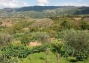 A Tuscan View (9)