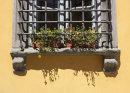 Tuscan Window Box