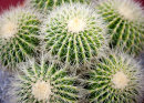 Prickly Situation!