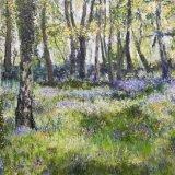 Sunlit bluebell wood