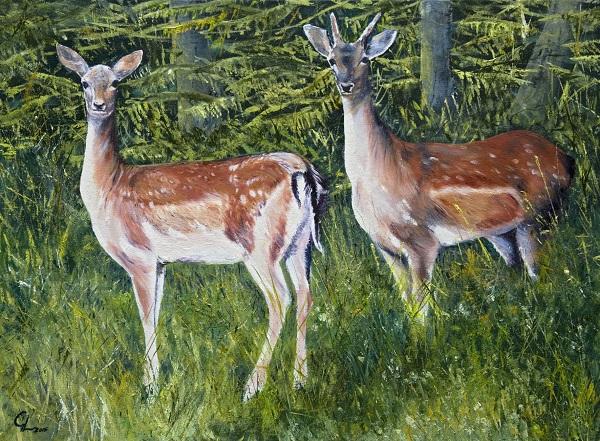 Fallow Deer In Homefield Wood
