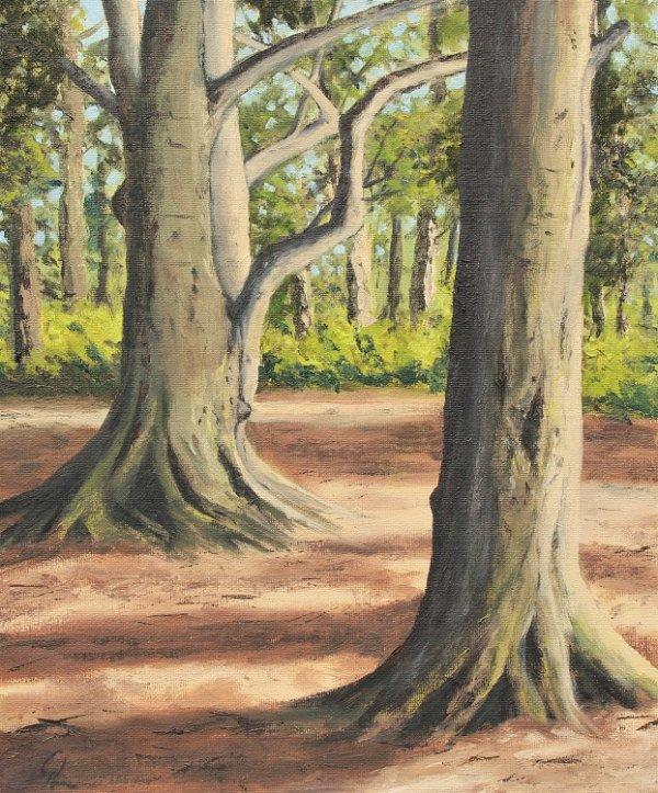 Gorse Covert Beech Trees
