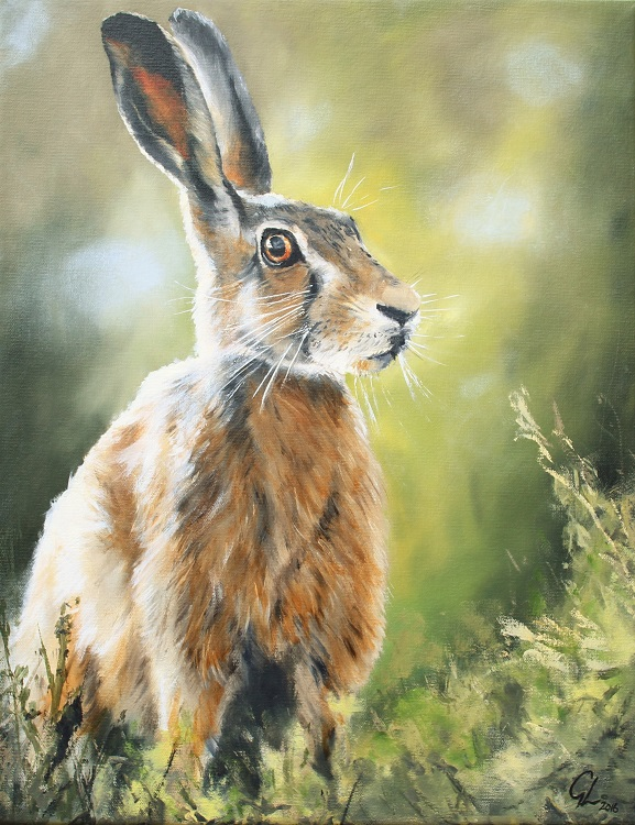 Hare in sunlight