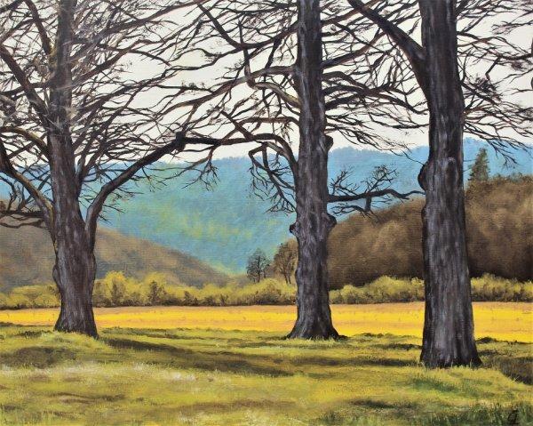 Wye Valley Oak Trees