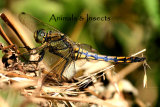 Gallery 4 - Animals & Insects