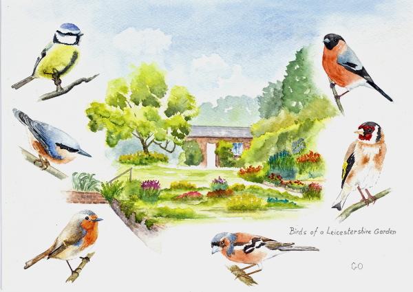 Birds of a Leicestershire Garden