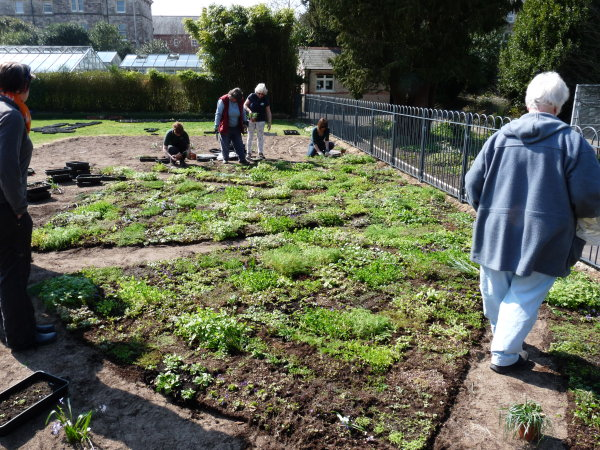 Dorcester Borough Gardens Community grown T Lawn in the making