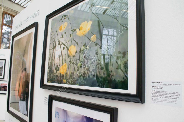 Work on display at the Nash Gallery Kew for IGPOTY 10