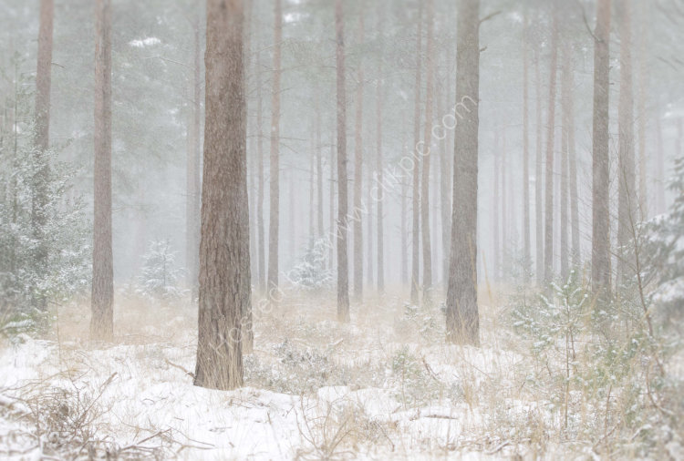 Winter arrives in the Ringwood Forest