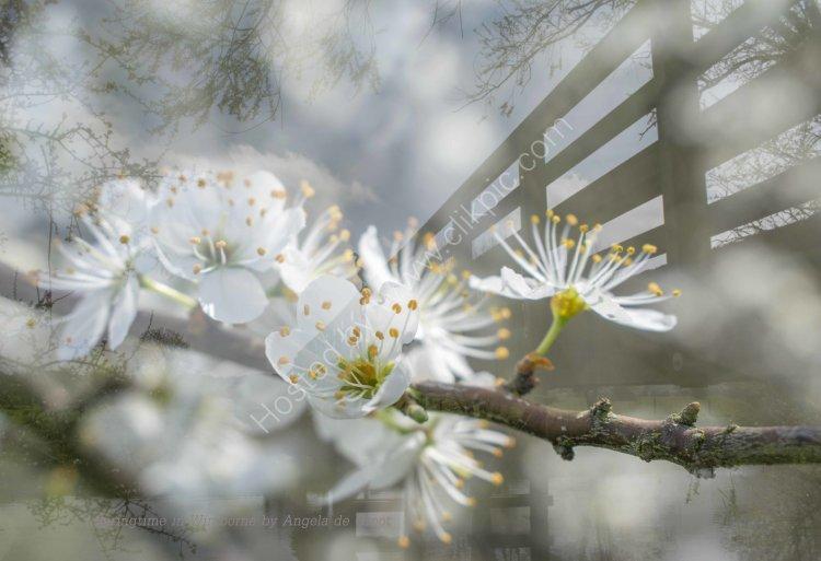 A Dorset Spring