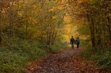 An Autumn Stroll Pat Clarke