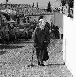 Andalusian Lady Johnny Bullingham
