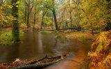 HC Landscape - Woodland in Autumn Jane Pickles