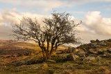 Lone tree Jenni Cheesman