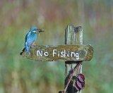 No Fishing Sally Lloyd-Jones