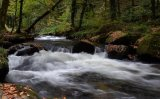 Silver - Autumn in Golitha Falls Norma Harbinson