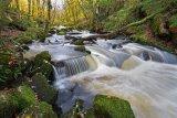 Silver - Golitha Falls Adrian Langdon