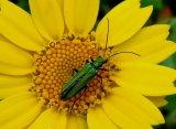 Silver - Green Pollinator Delia Trathen