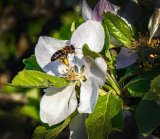 Silver - The Pollinator Penry Archer