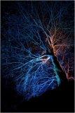 illuminated oak Mike Benwell