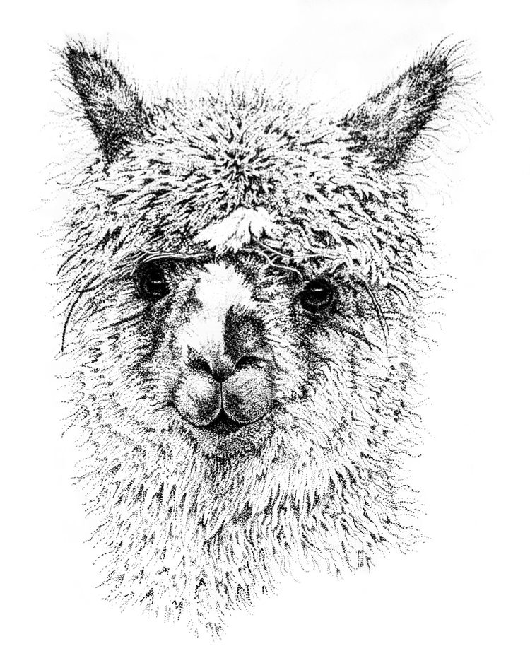 Alpaca Shiraz stipple