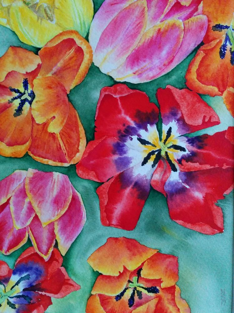 tulips, watercolour.
