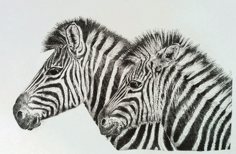 Sid Siousxie zebras stipple