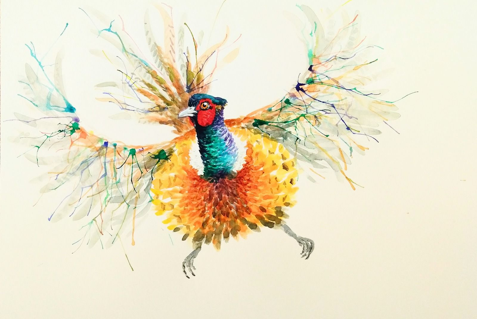 Pheasant Philip Watercolour