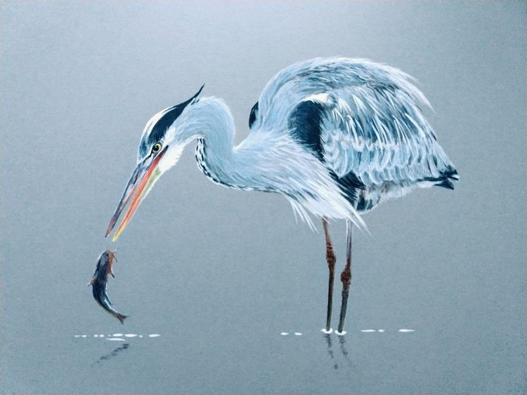 grey heron wading fish watercolour gouache