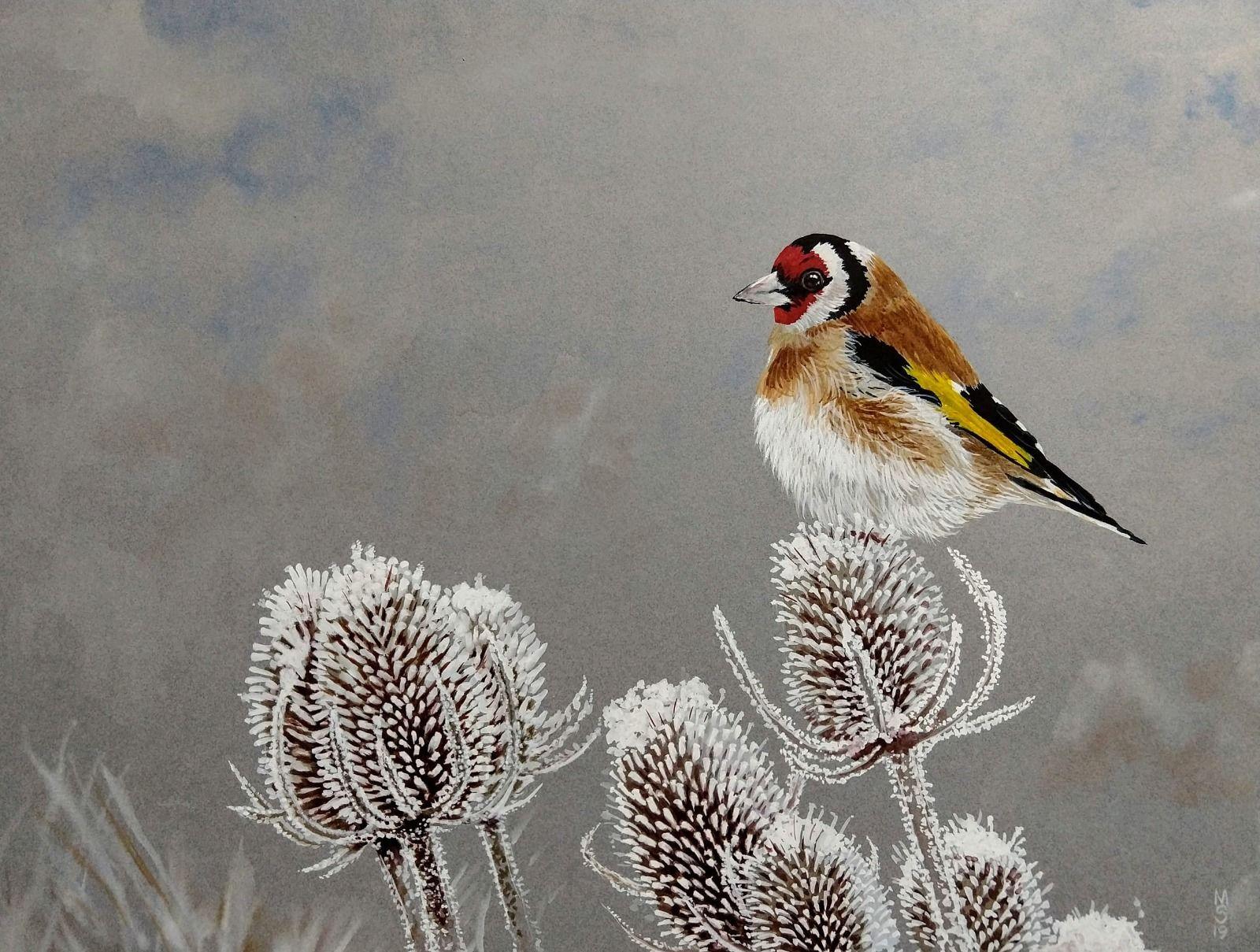 Goldfinch teazels frost winter watercolour gouache winter