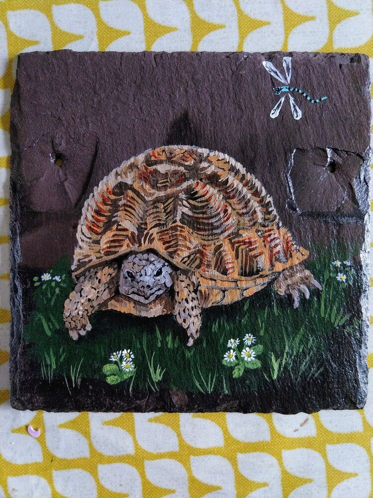 Tortoise commission