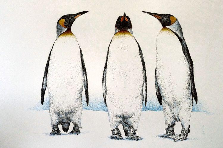 King Penguins, stipple, ink