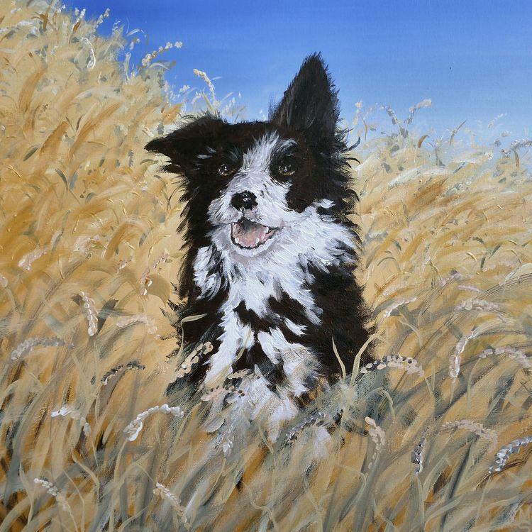 collie dog acrylic cornfield
