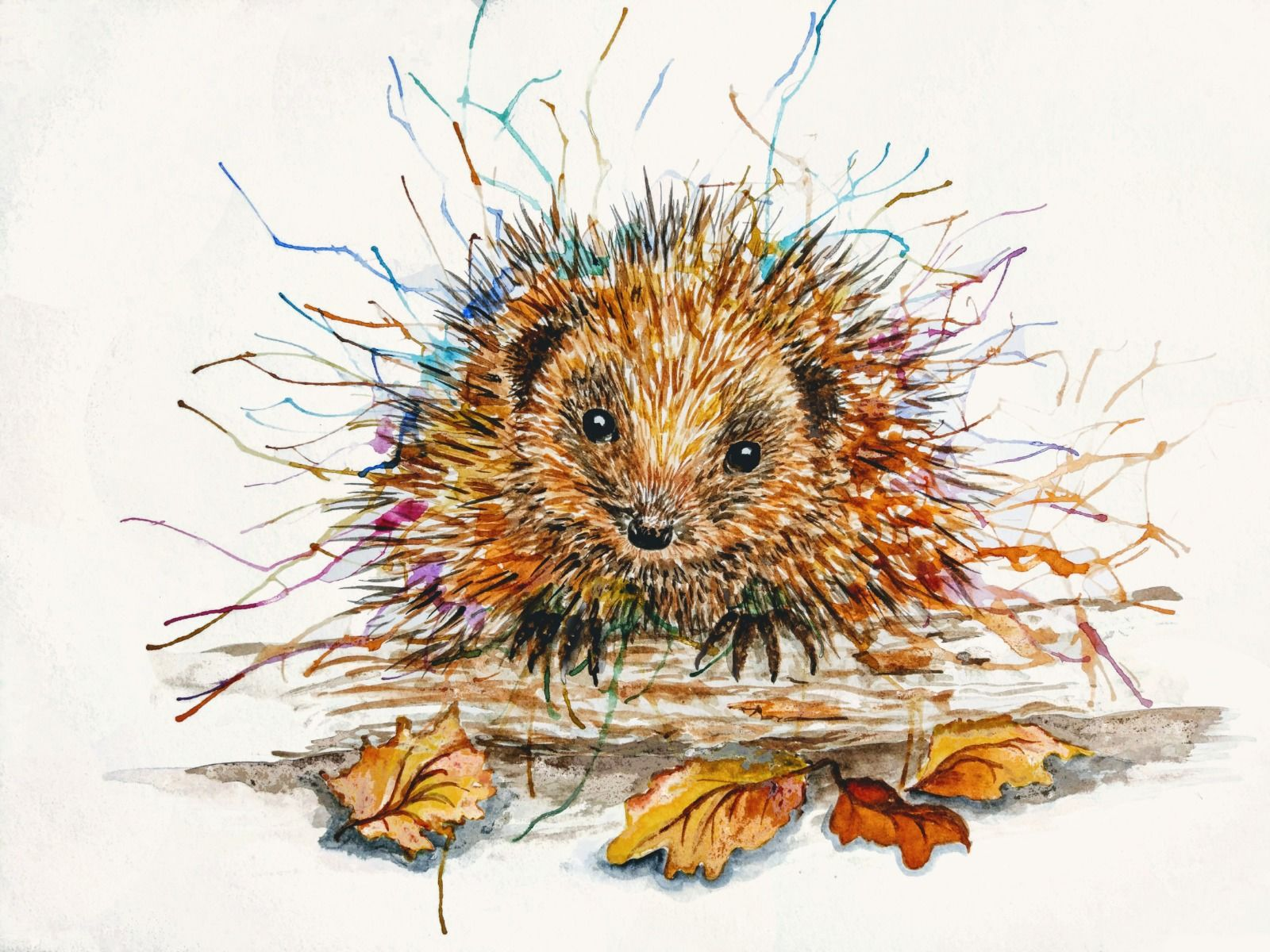 Harvey hedgehog greetings card watercolour