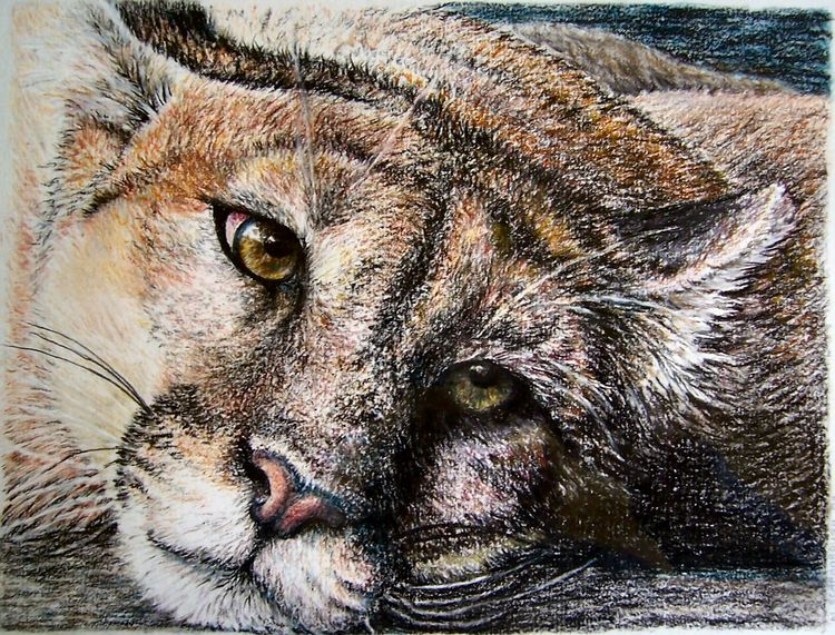 puma,pastel, pencil, gouache