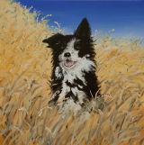 Collie in a Wheatfield